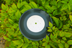 HIVE Song and Game Vinyl (record in a hedge)